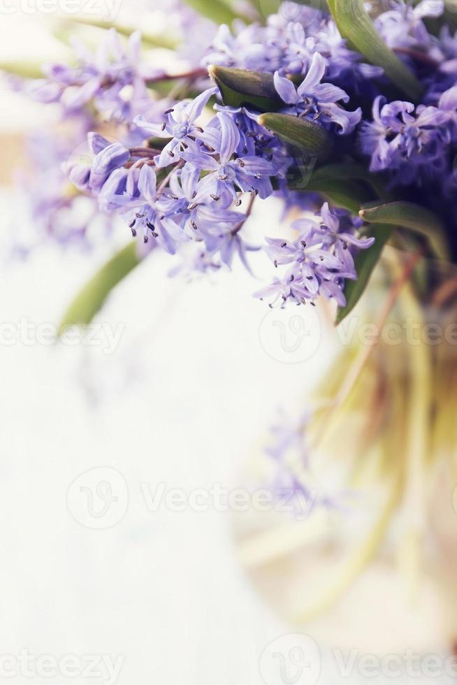 bucaneve blu, vintage foto