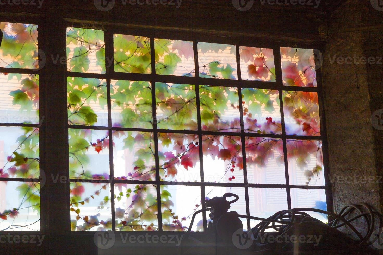 vecchia finestra in colori armonici con edera foto