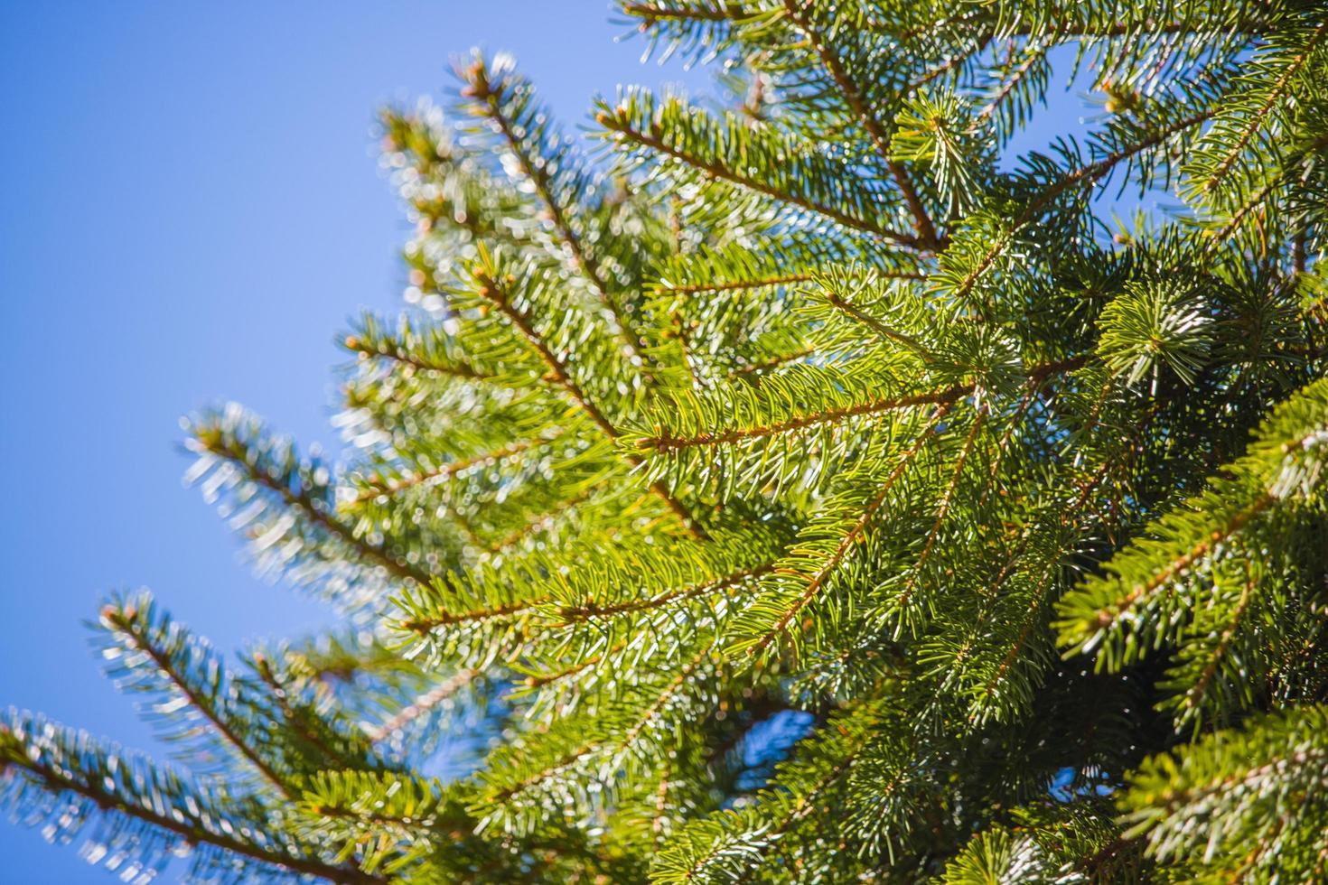 albero dalle foglie verdi foto