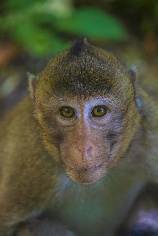 primo piano di una scimmia foto