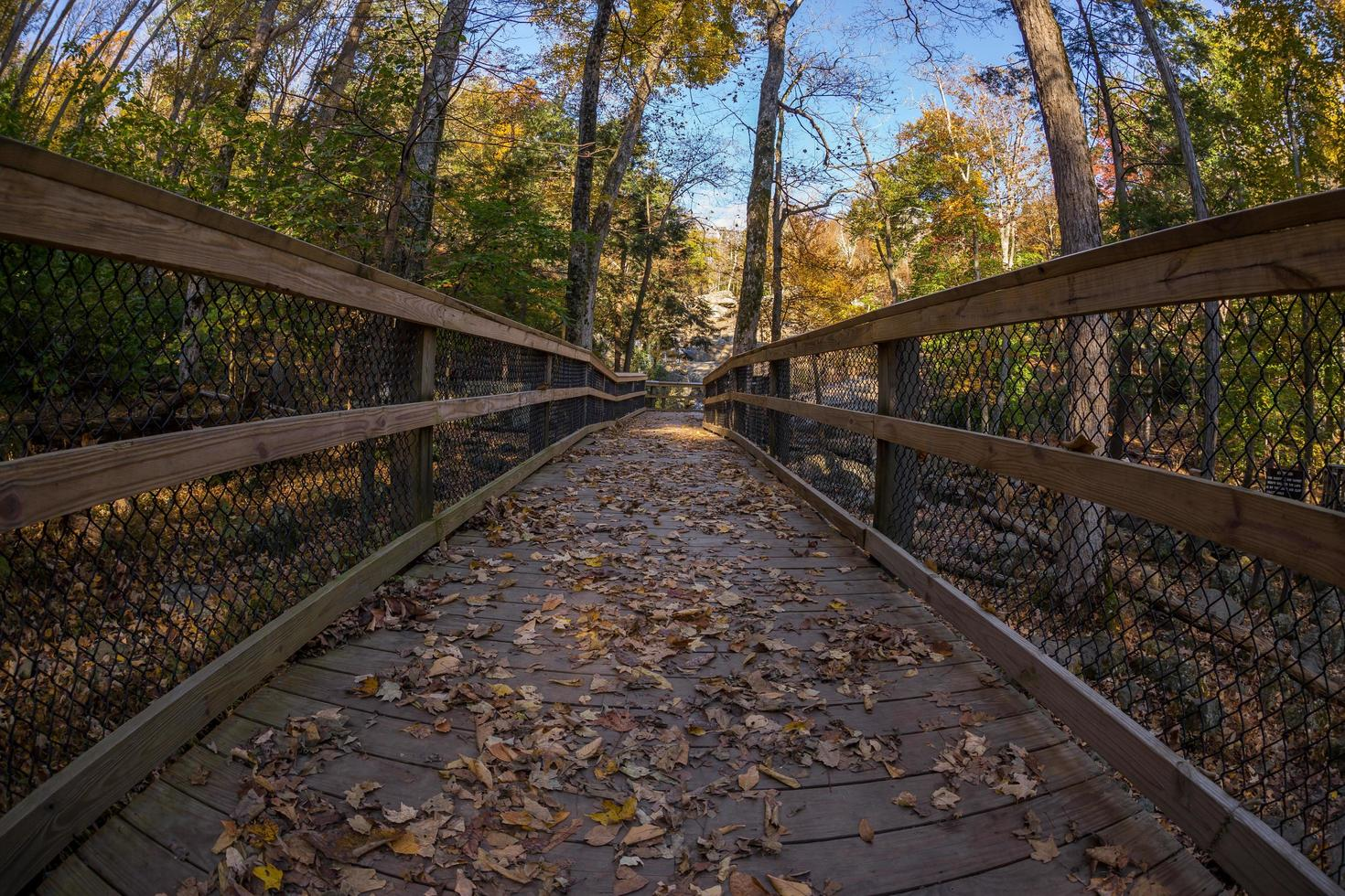 sentiero di passerella in legno in una foresta foto