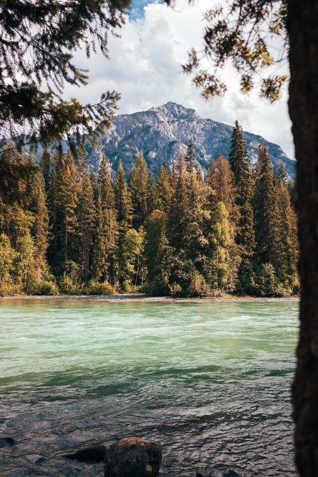 fiume circondato da alberi foto