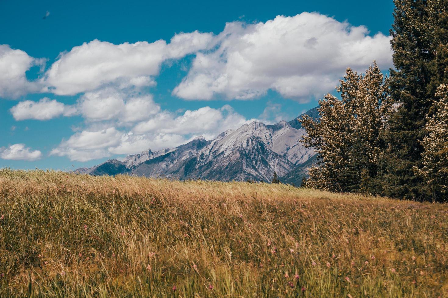 campo di erba marrone foto
