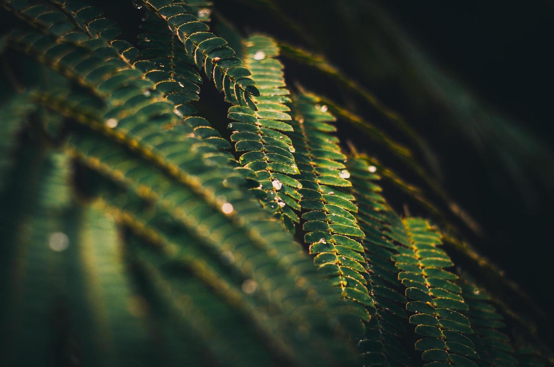 felce verde dopo la pioggia foto