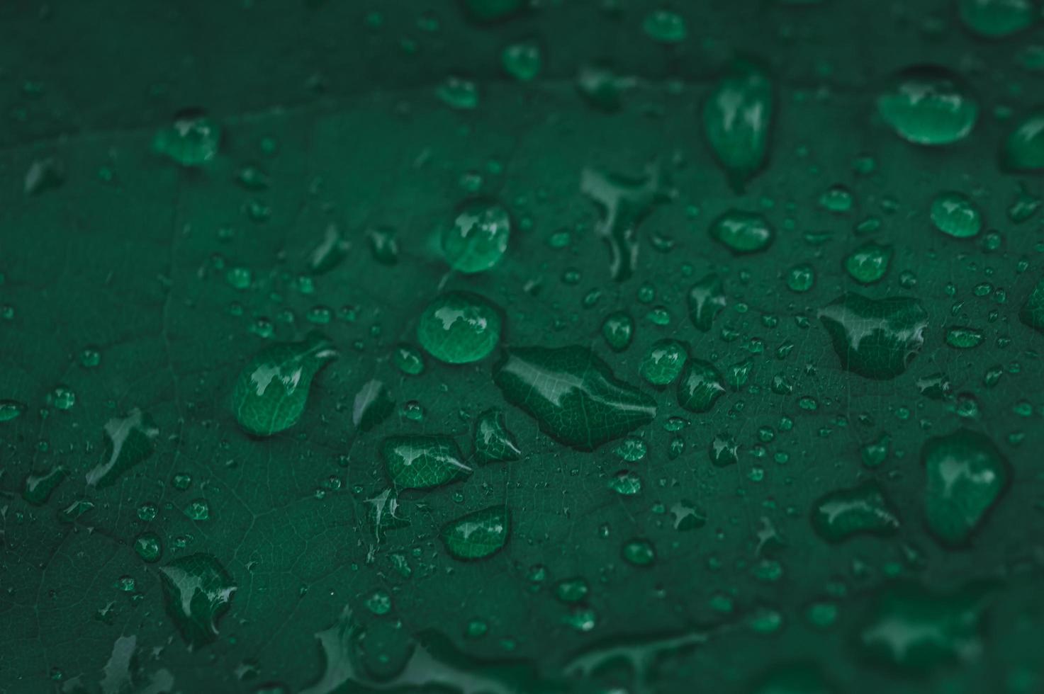gocce di pioggia su foglia verde foto