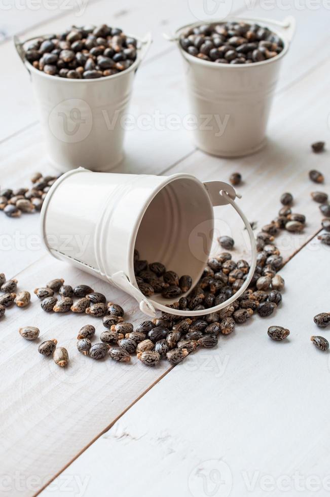 semi di olio di ricino-ricinus communis foto