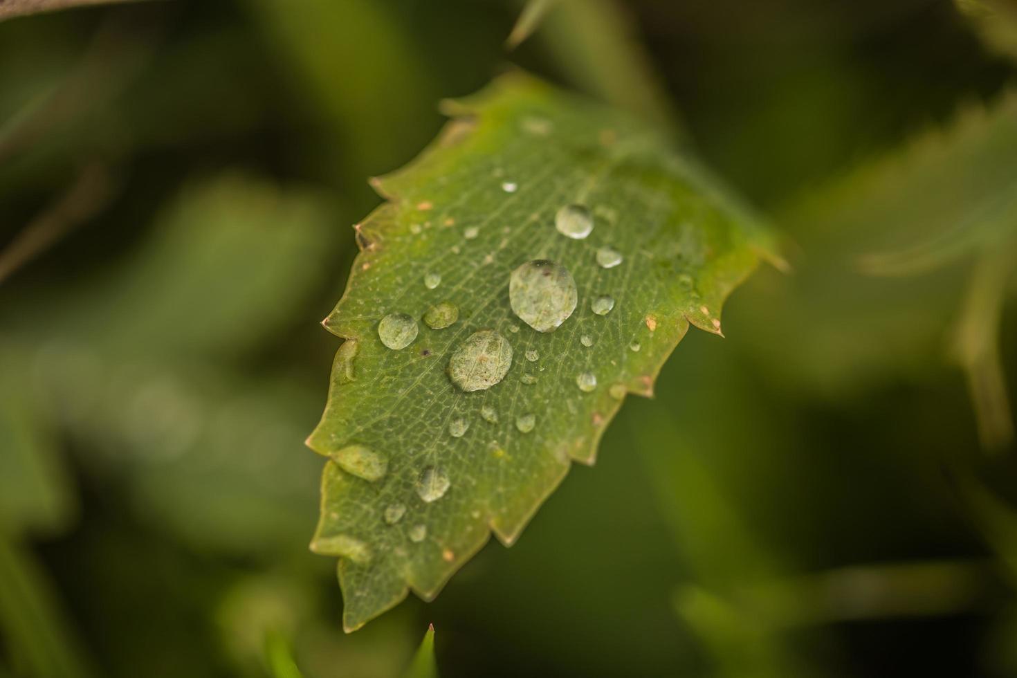 gocce di pioggia su una foglia verde foto