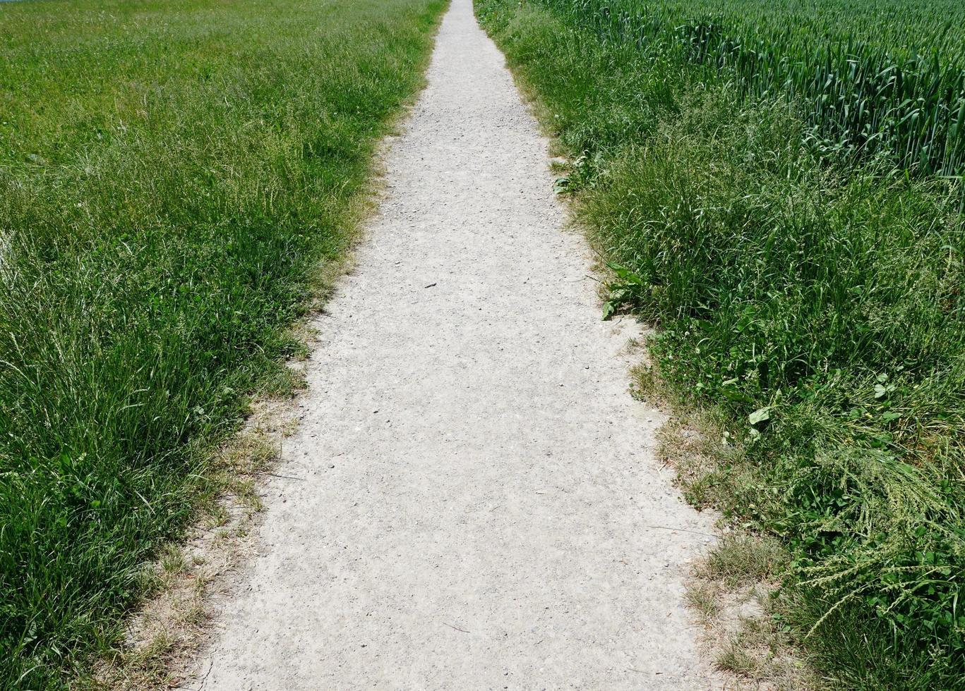 percorso tra due campi verdi foto