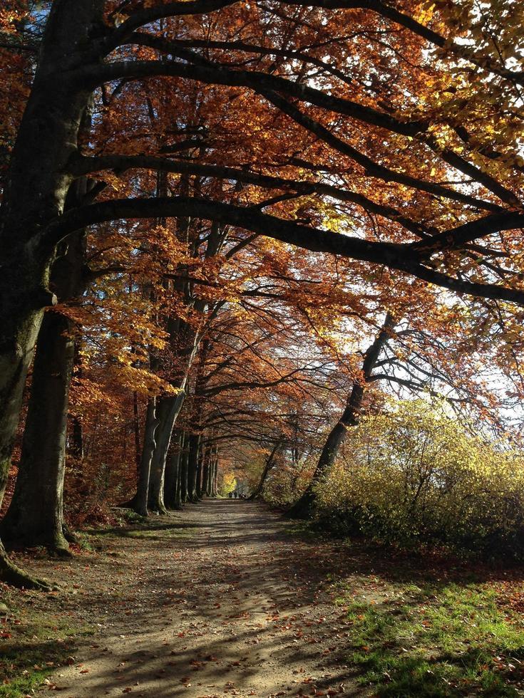 strada nella foresta foto