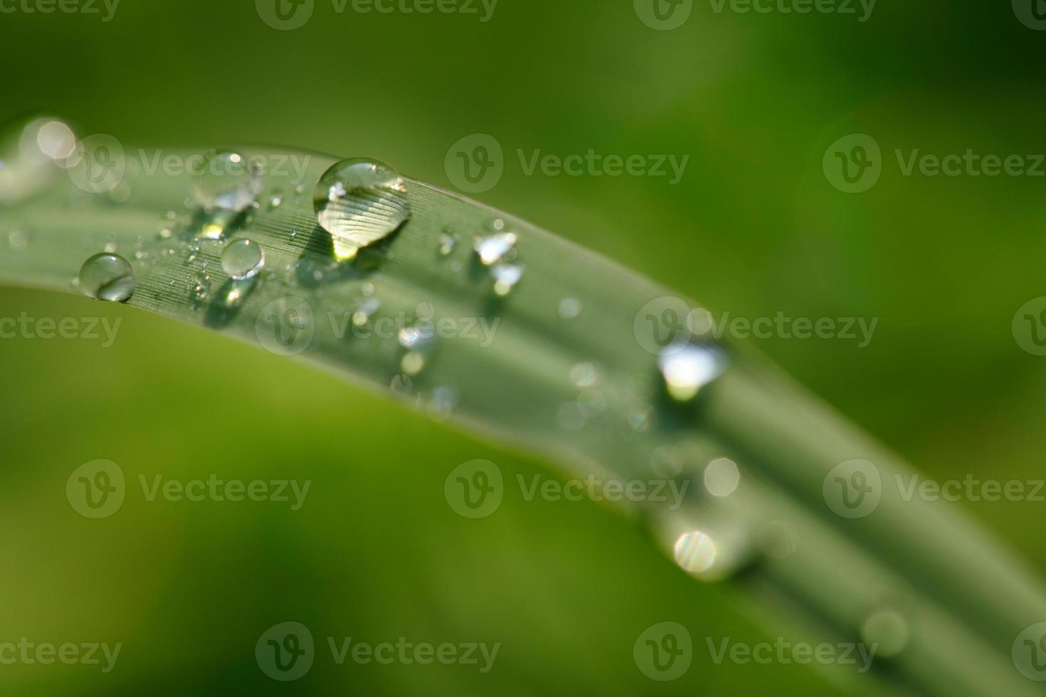 gocce d'acqua sull'erba foto
