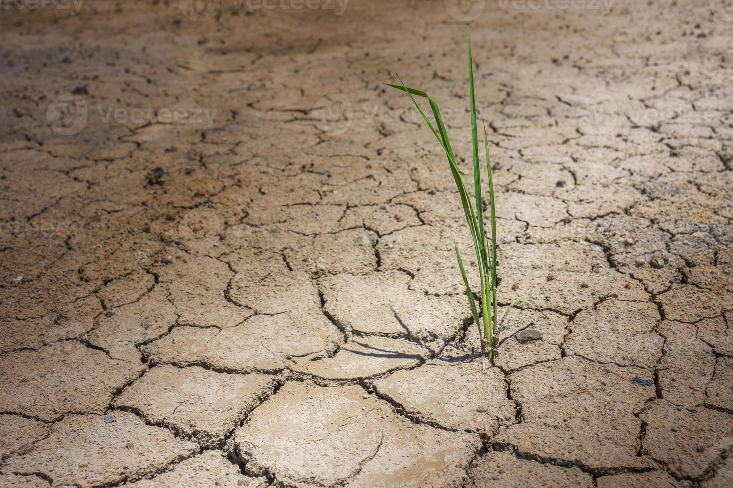 erba sul terreno asciutto della crepa foto