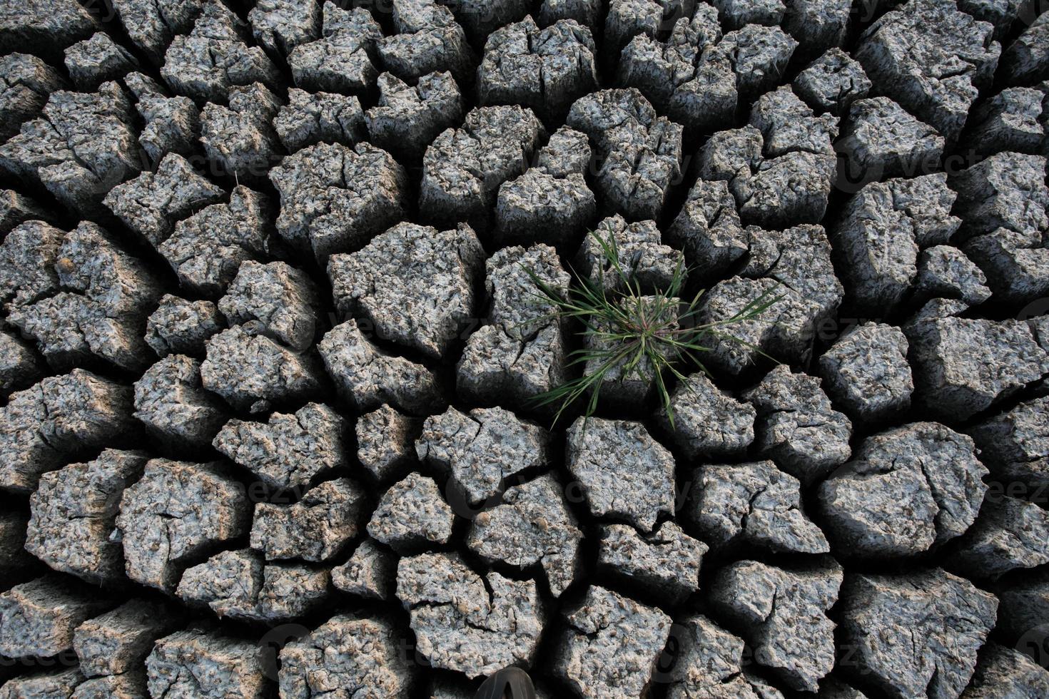 pianta in fango incrinato essiccato foto