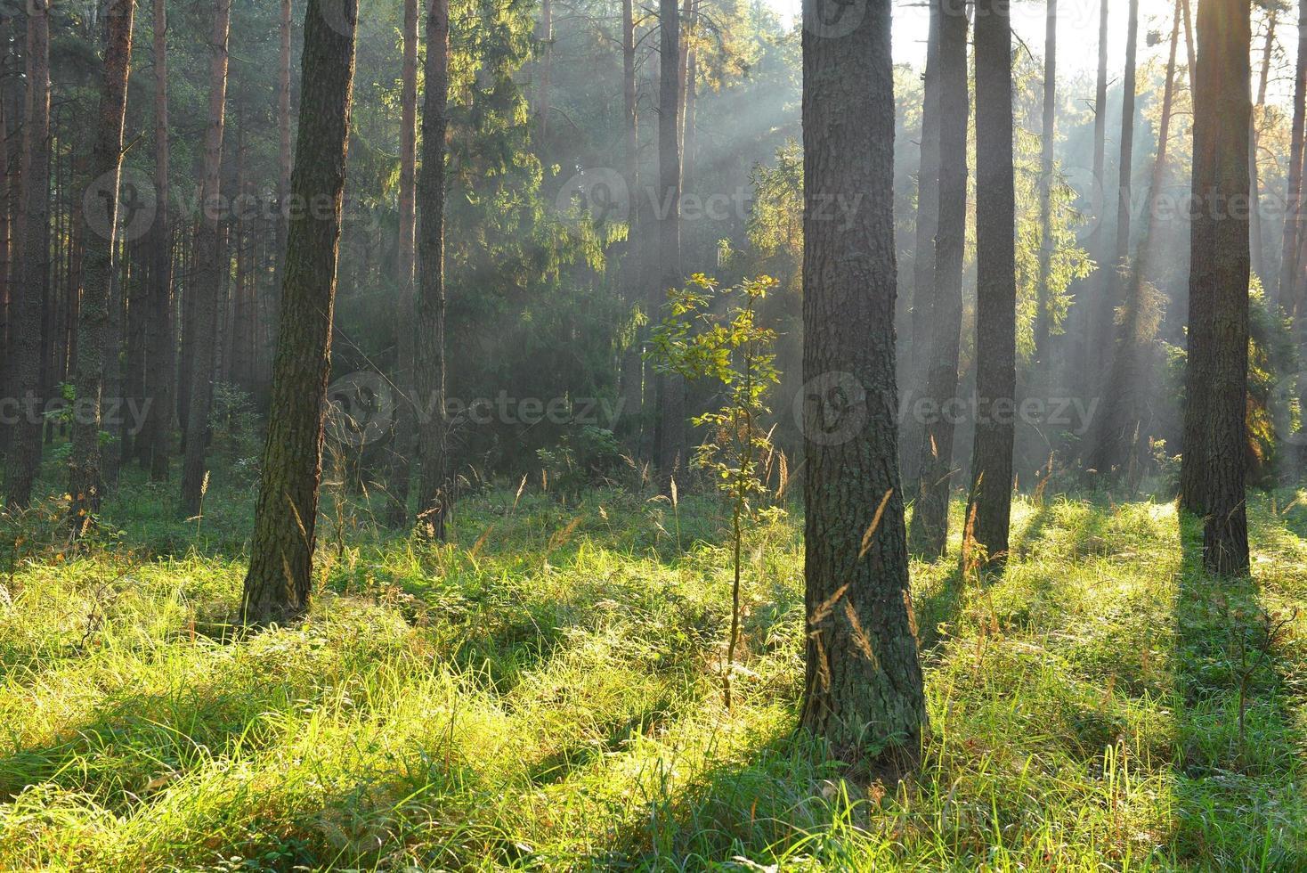 foresta foto
