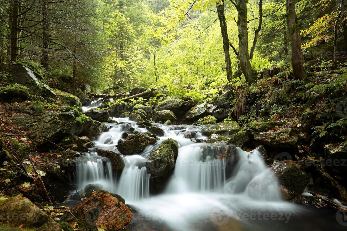 ruscello della foresta foto