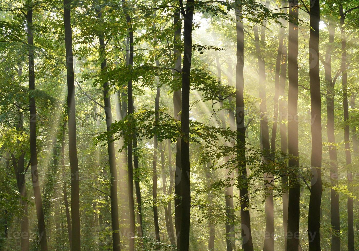 alberi forestali foto