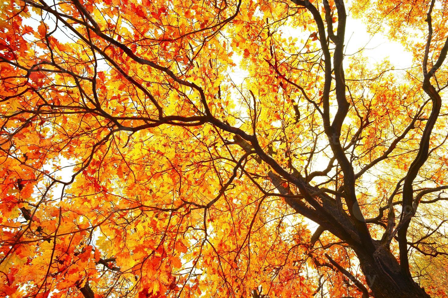 re della foresta - albero foto
