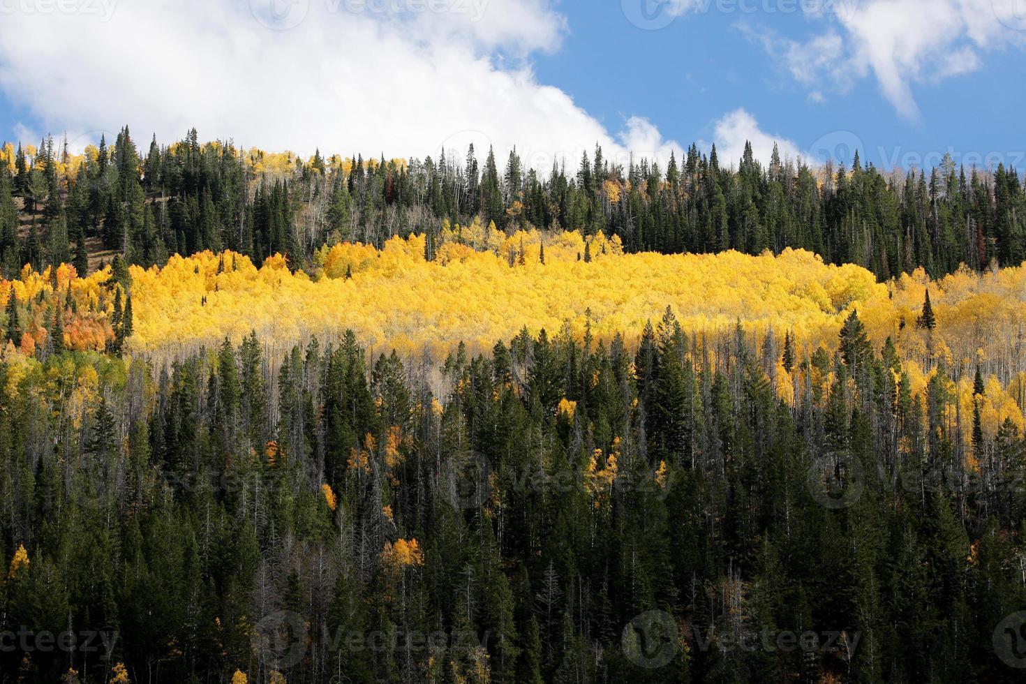 luminosi colori autunnali foresta di pioppi foto