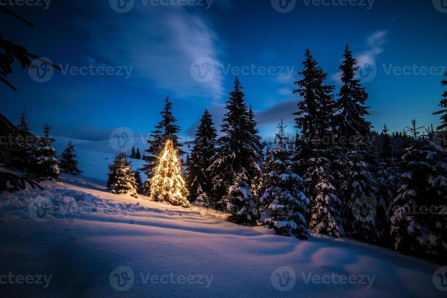 albero di natale nella foresta foto