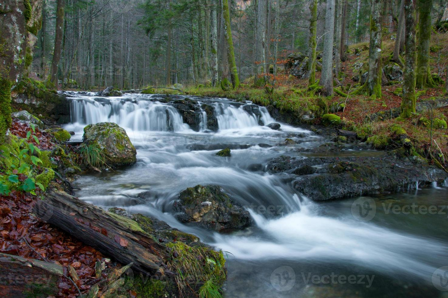 torrente nella foresta autunnale foto