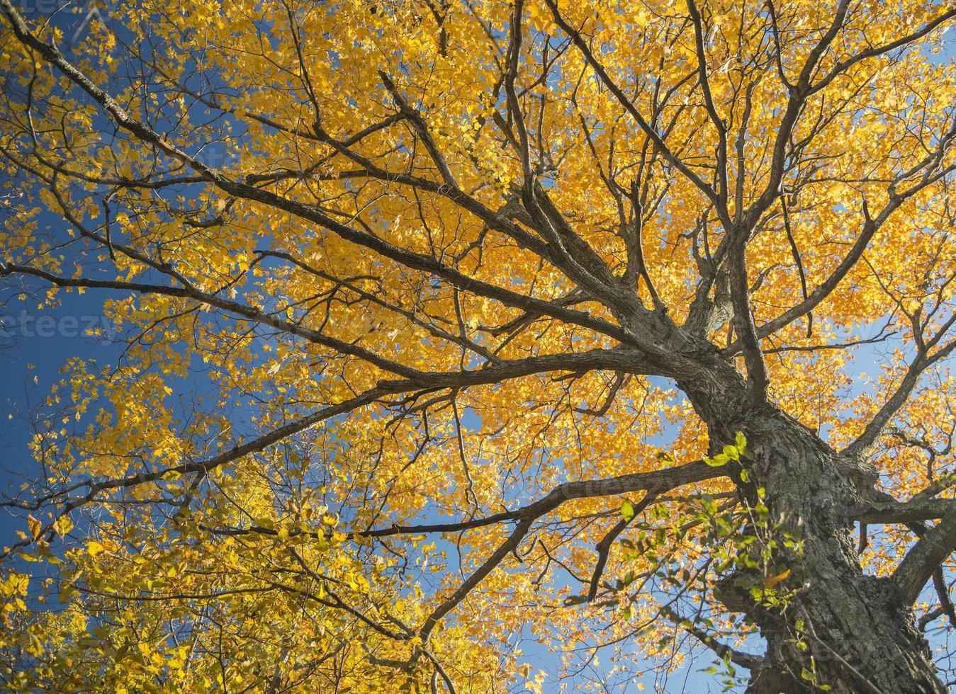 foresta in colori autunnali in autunno foto