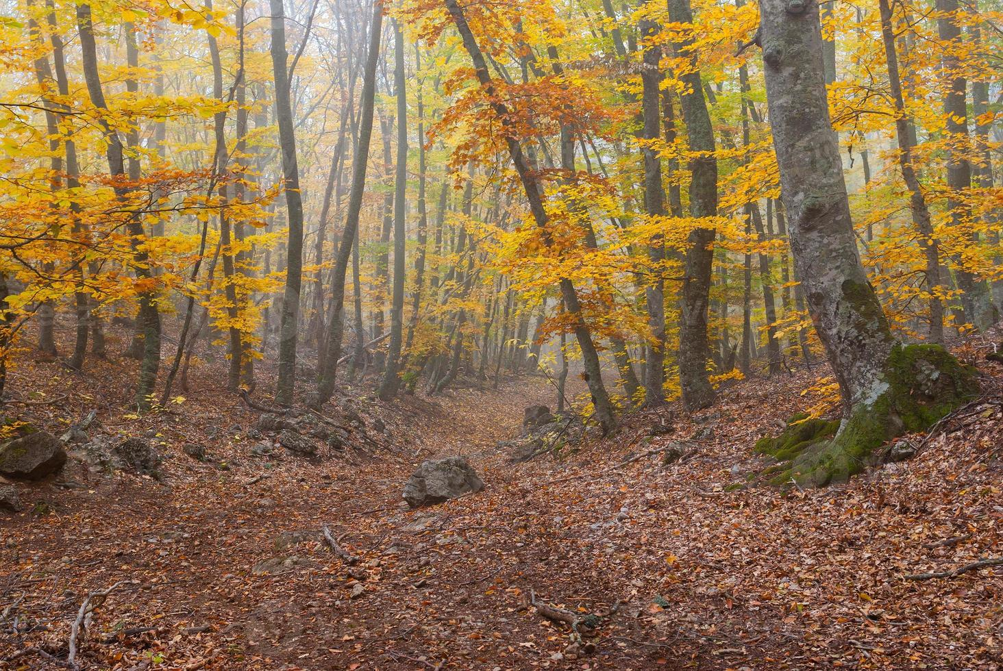 paesaggio forestale con nebbia nelle montagne della Crimea foto