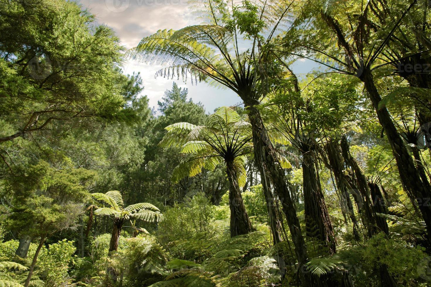 foresta tropicale vicino a hahei foto