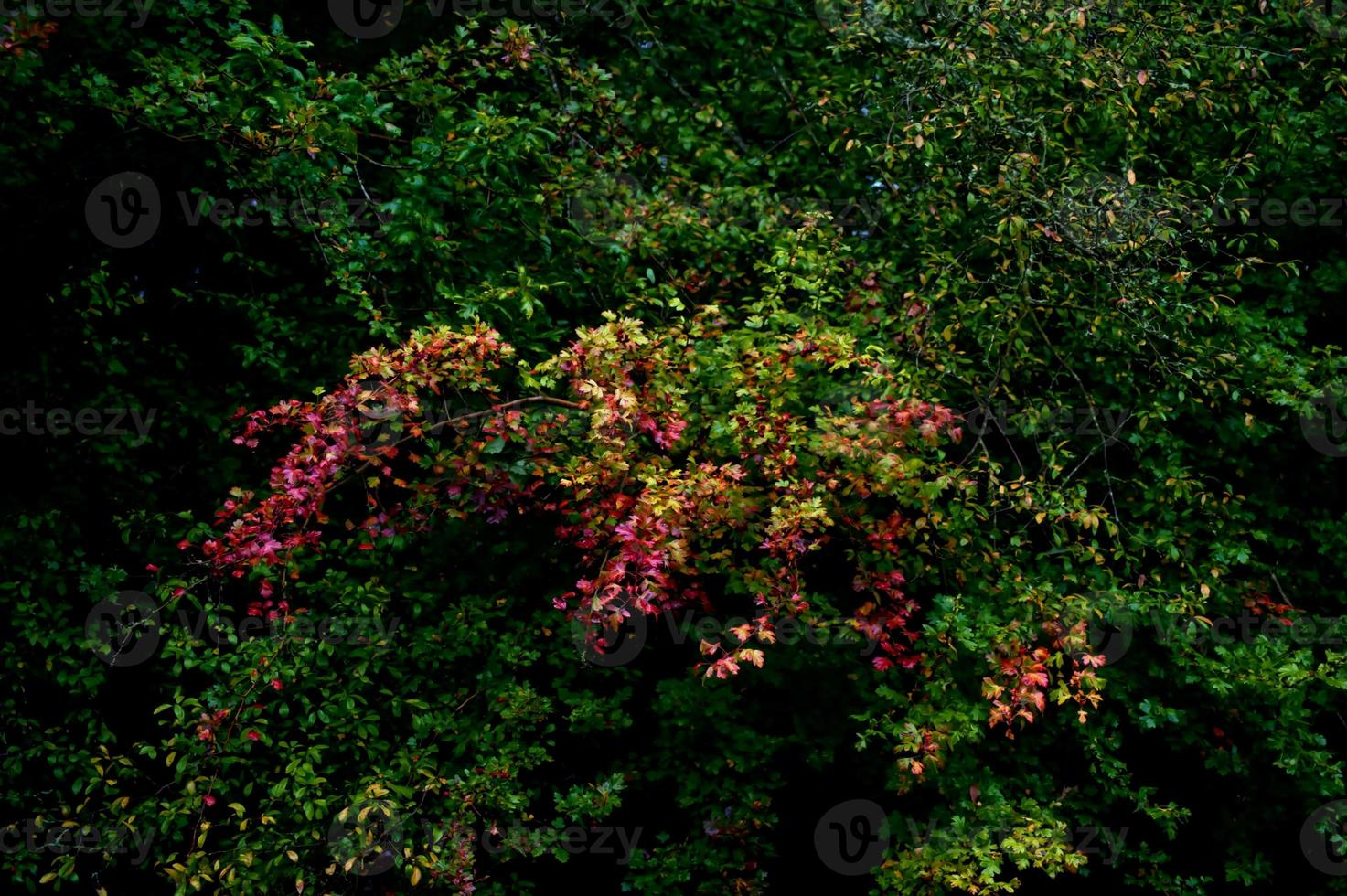 albero colorato sulla foresta foto