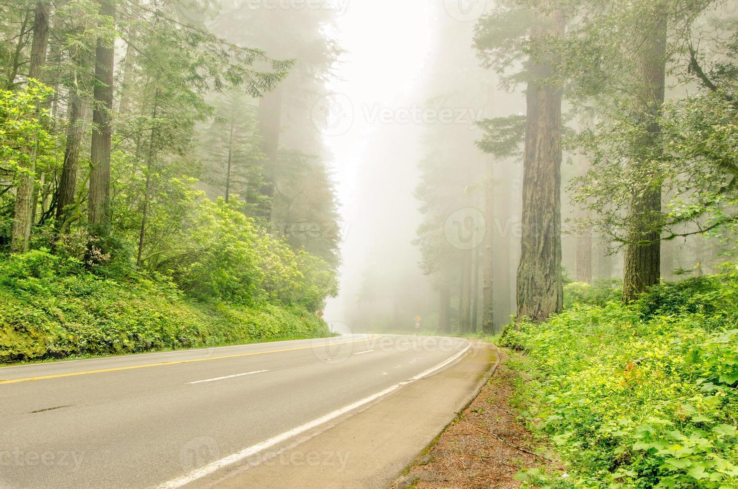 strada attraverso una foresta nebbiosa foto