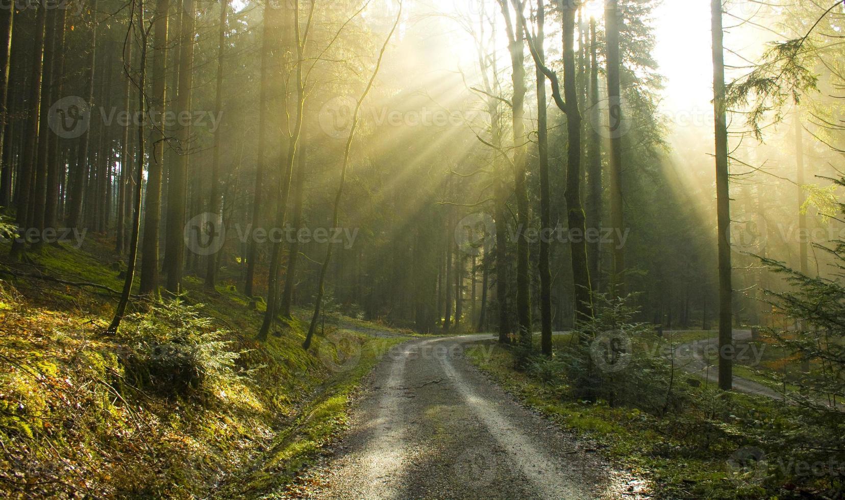 illuminata dal sole foto