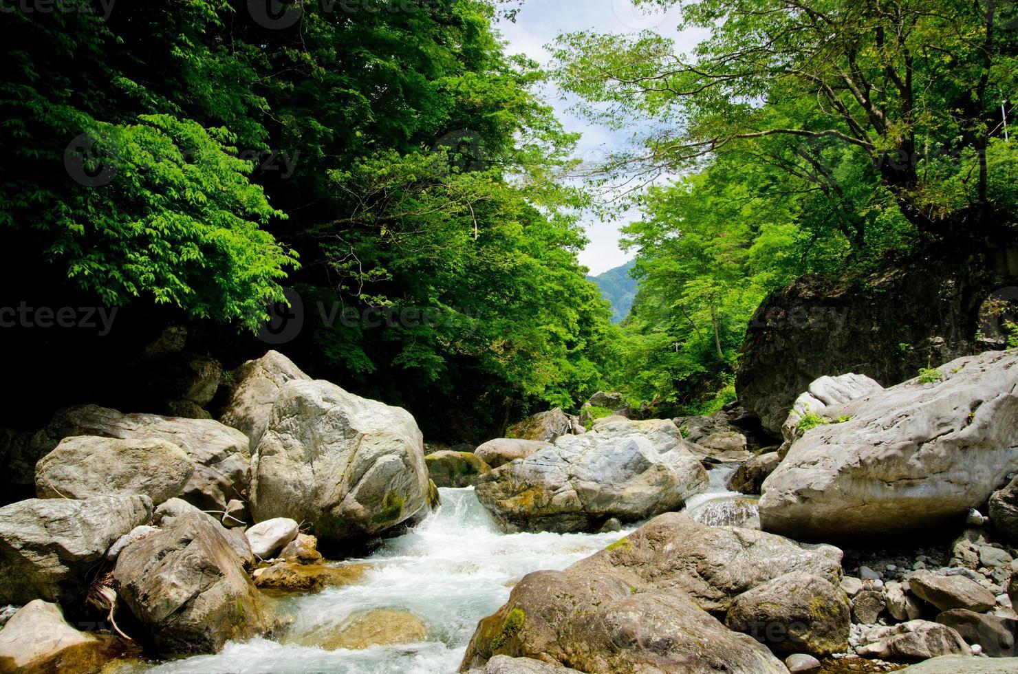 ruscello di montagna e la bellissima foresta di okutama foto