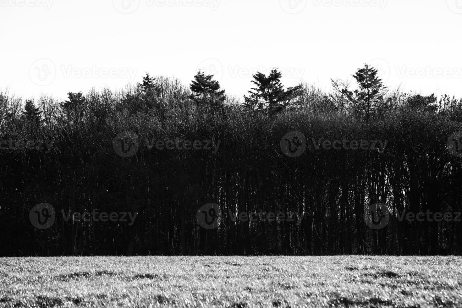 linea degli alberi foto