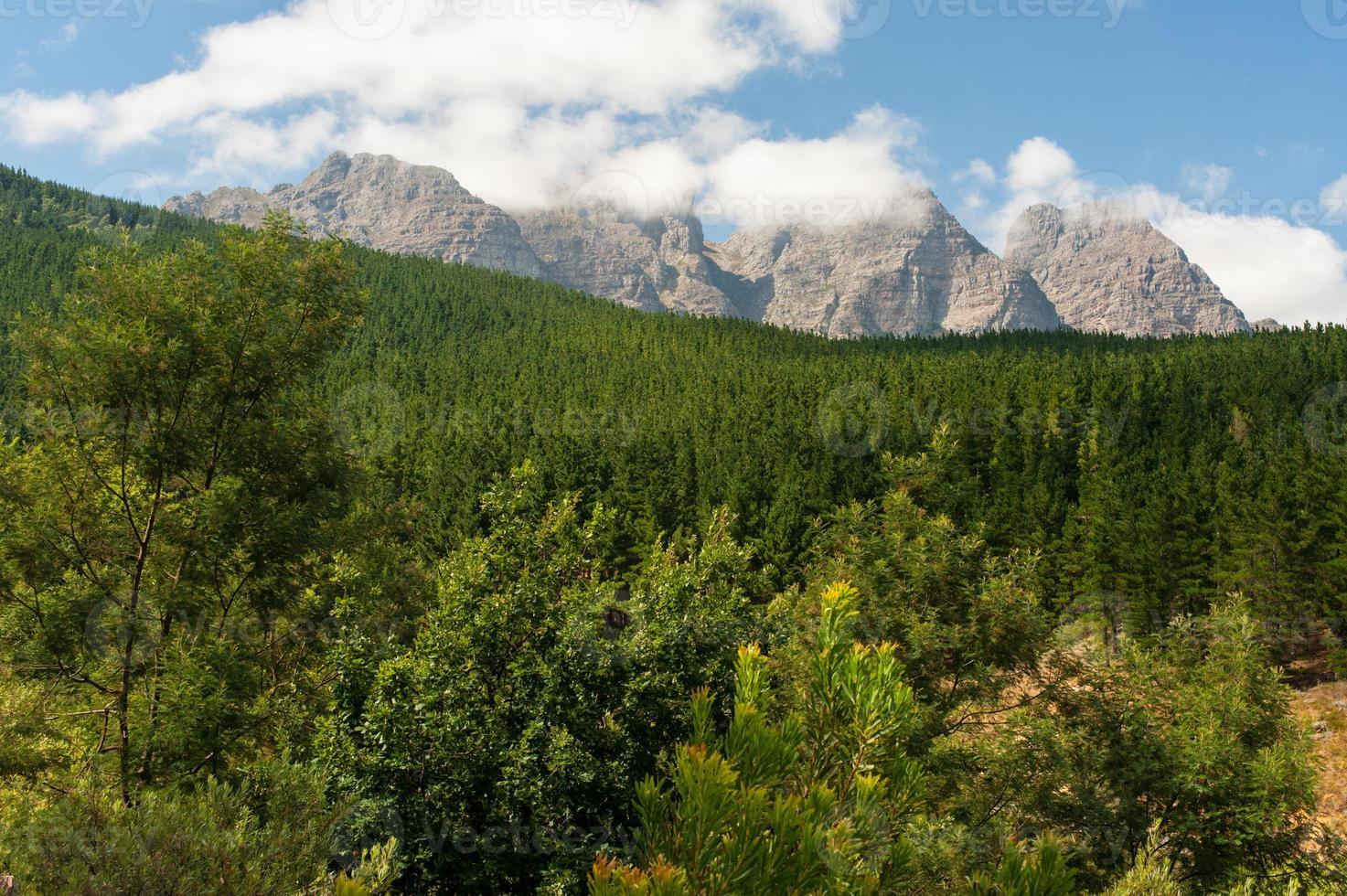 paesaggio forestale con montagne e cielo nuvoloso, sud africa foto