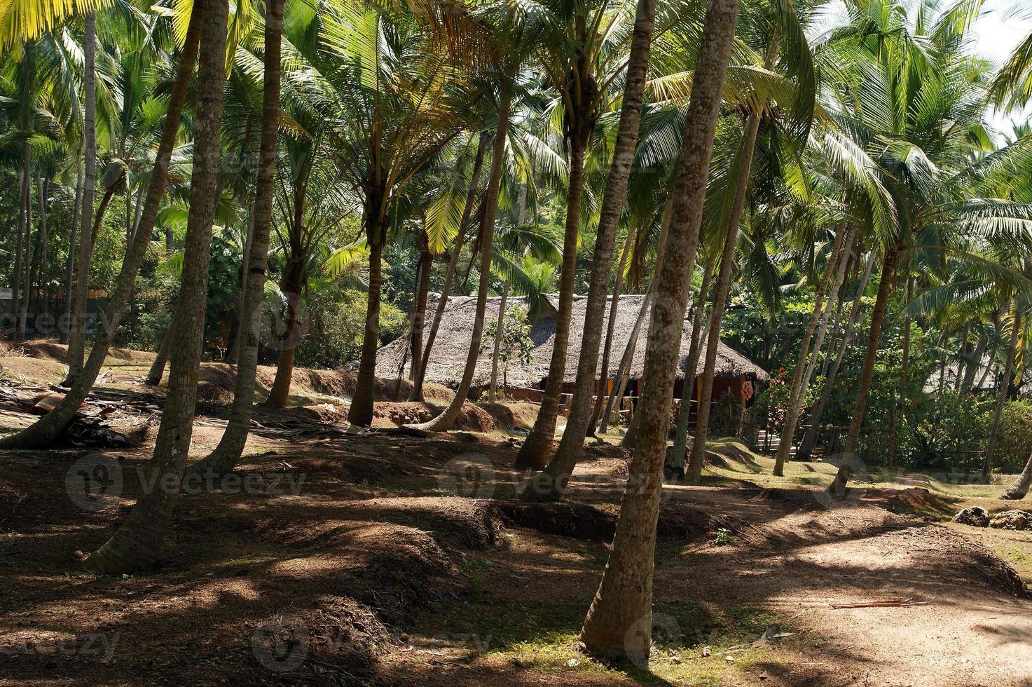 palme da cocco sulla riva dell'oceano foto