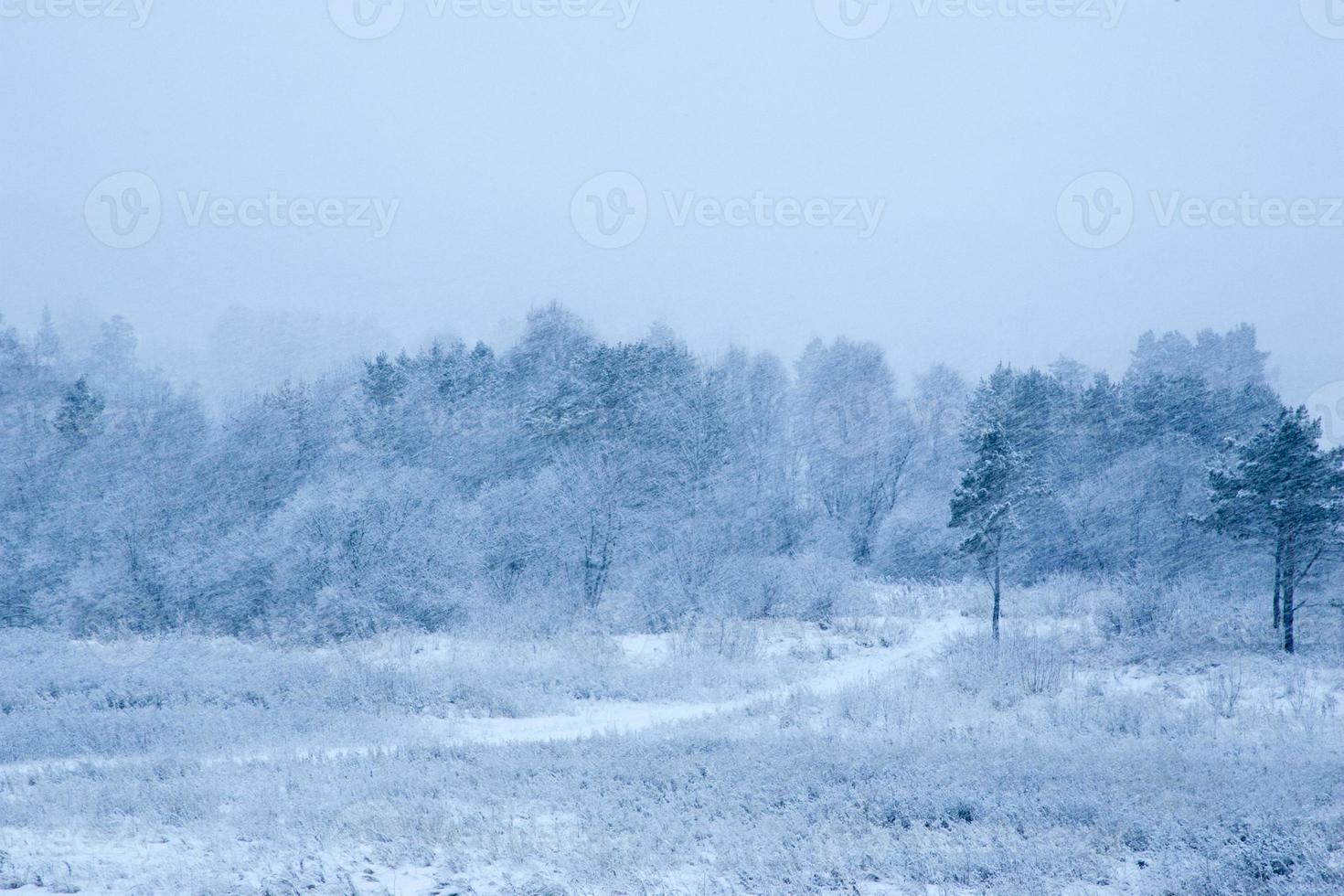 inverno in una foresta con la neve che cade a terra foto