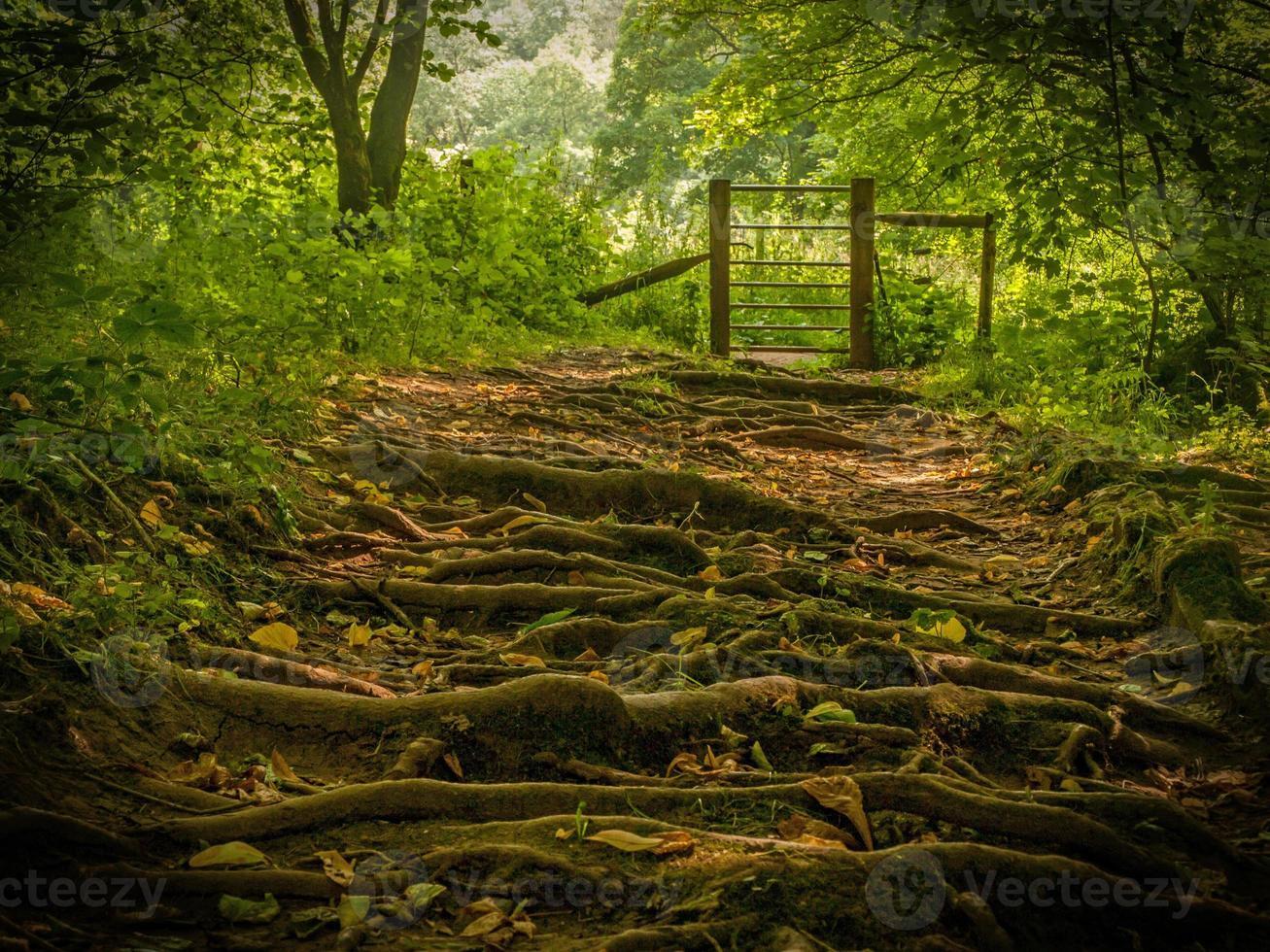 passeggiata nel bosco foto