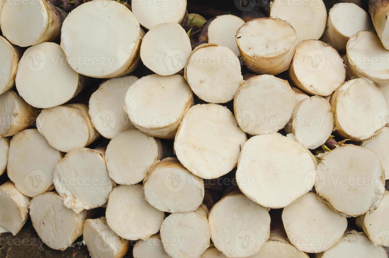 germoglio di bambù foto