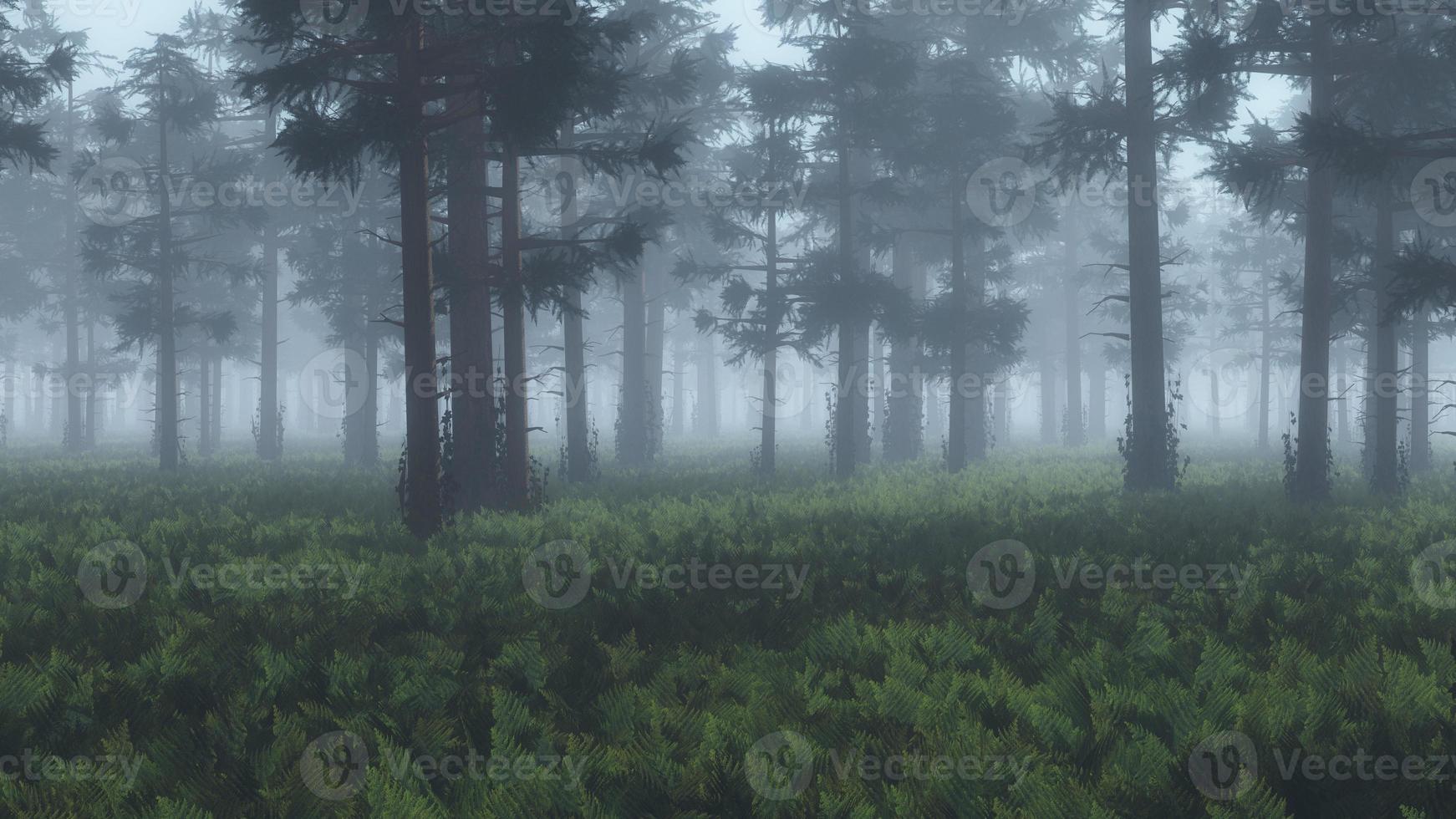 pineta nebbiosa con terreno di felce. foto