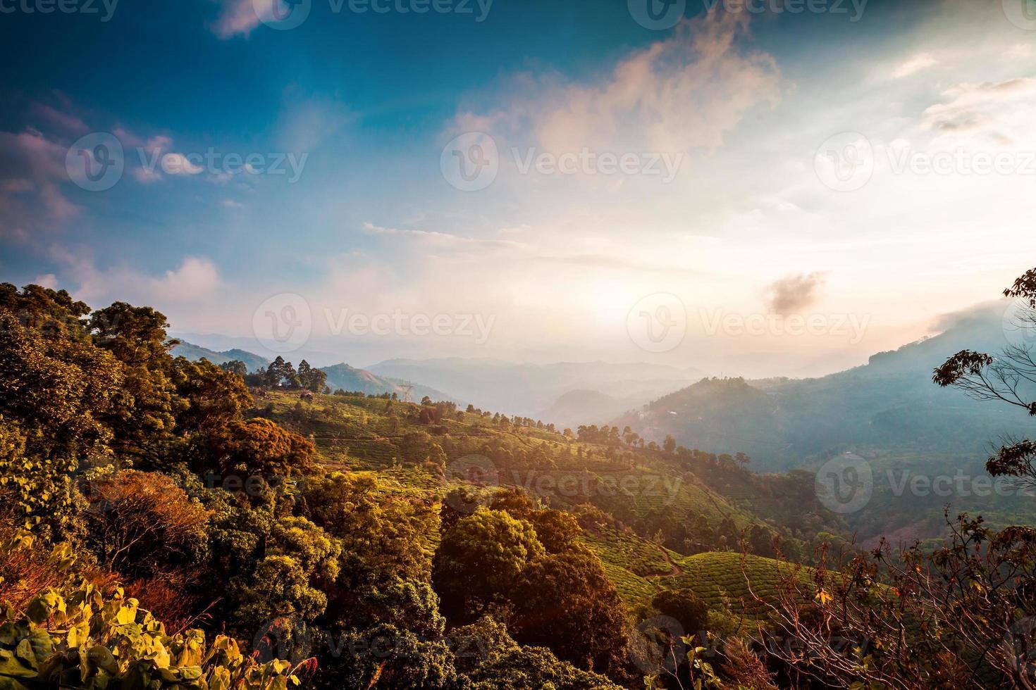 piantagioni di tè in india foto