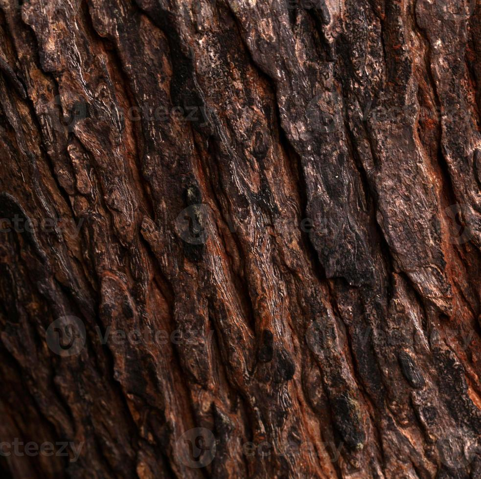 pelle del tronco d'albero foto