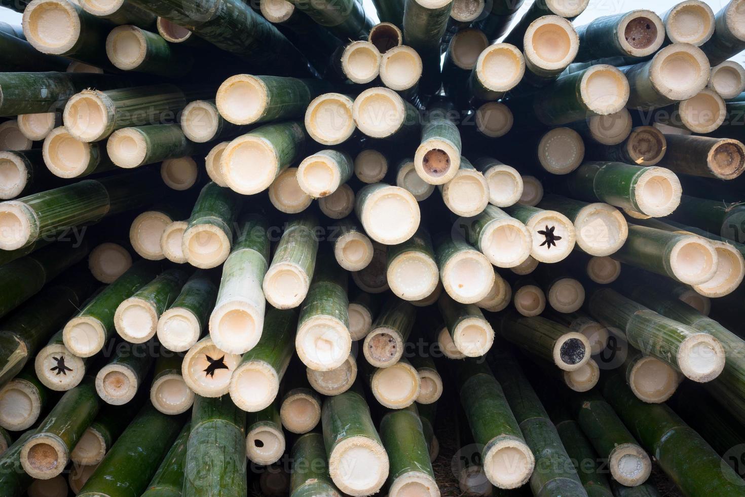 sfondo di bambù anteriore foto