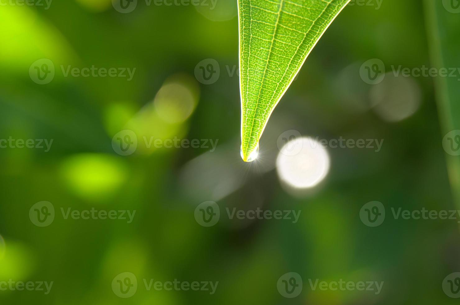 goccia di pioggia sulle foglie verdi foto
