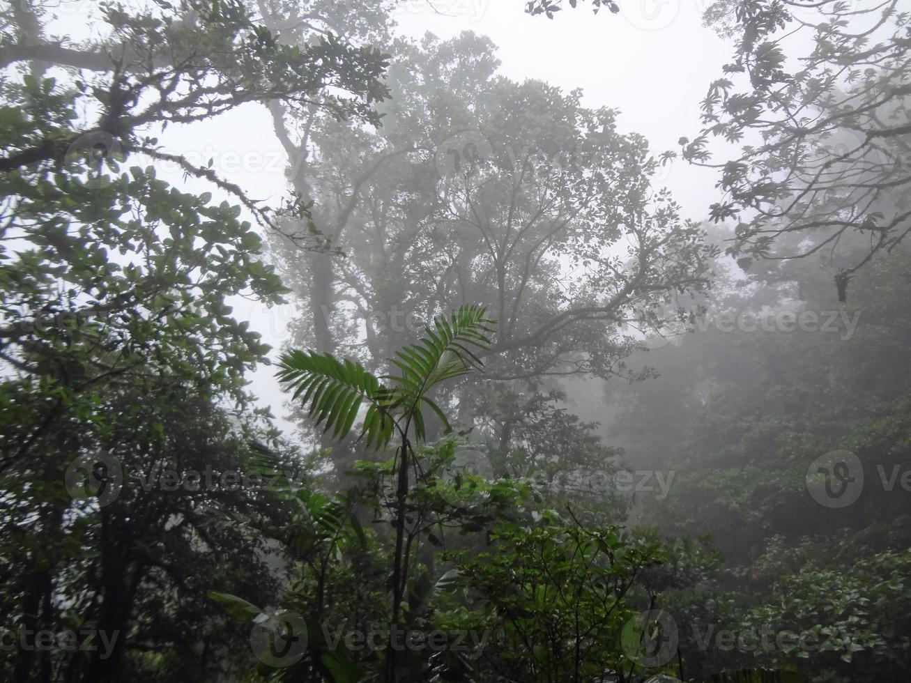 foresta pluviale del costa rica foto