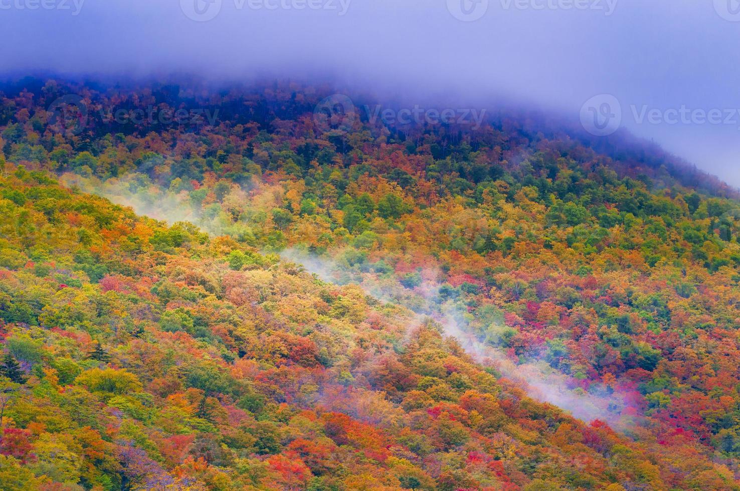 alberi colorati d'autunno. foto