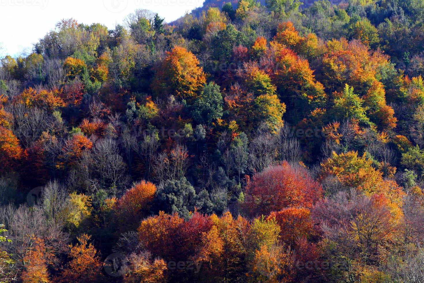 otoño foto