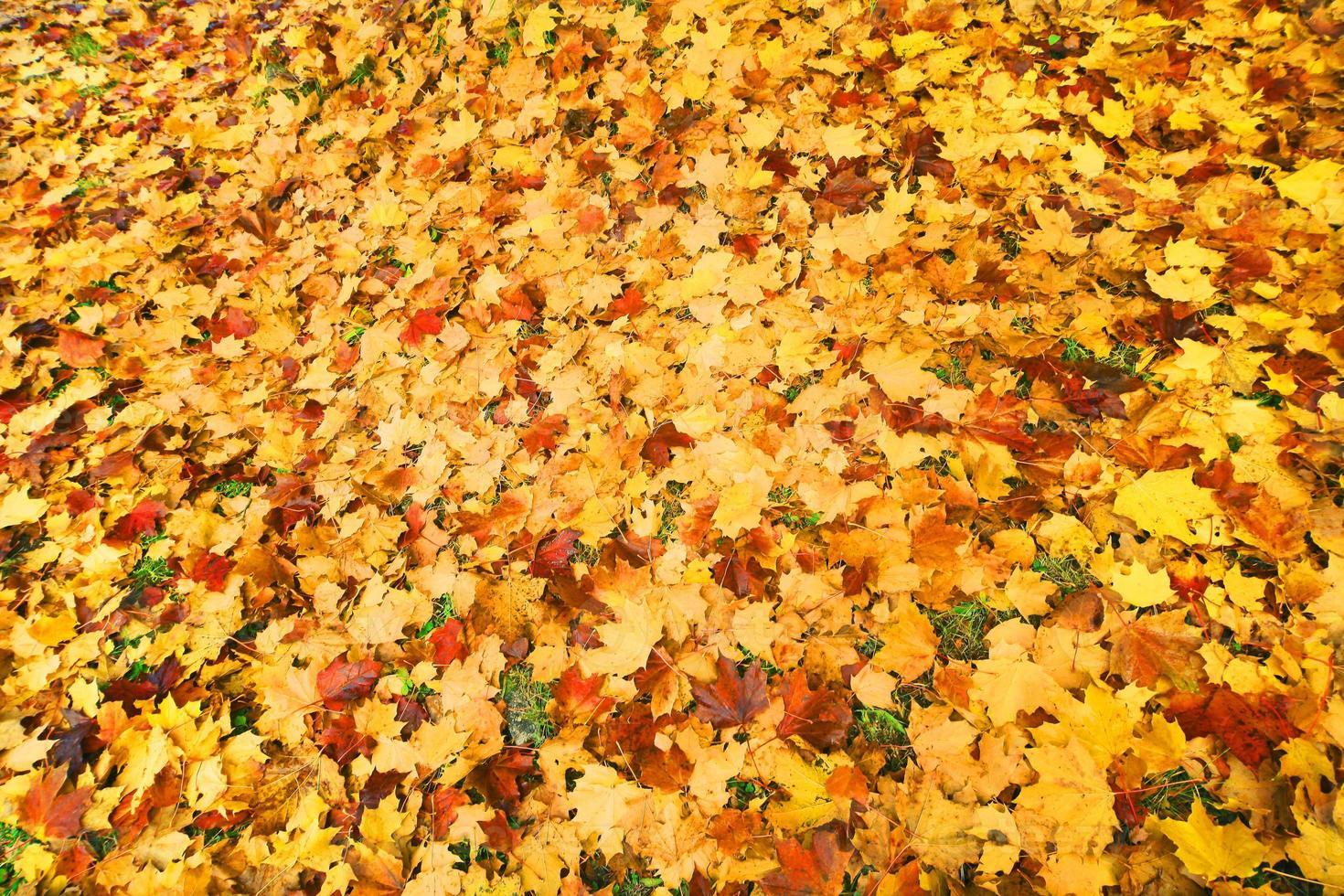 foglie cadute in autunno foto