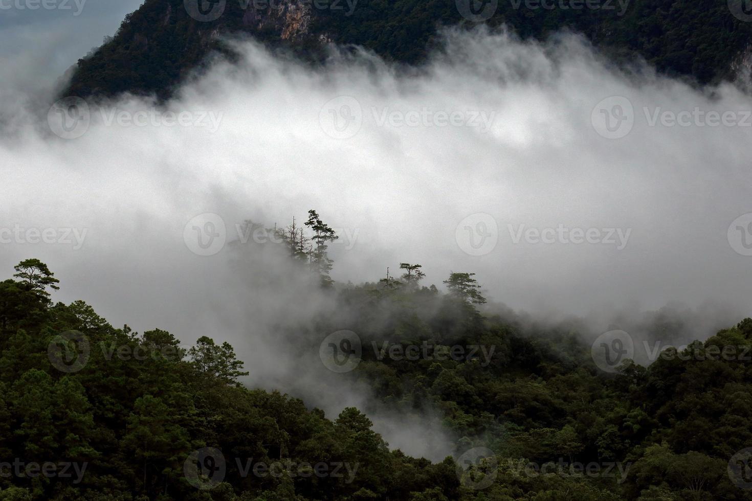 vista del paesaggio della foresta pluviale nella nebbia al mattino sulla montagna foto