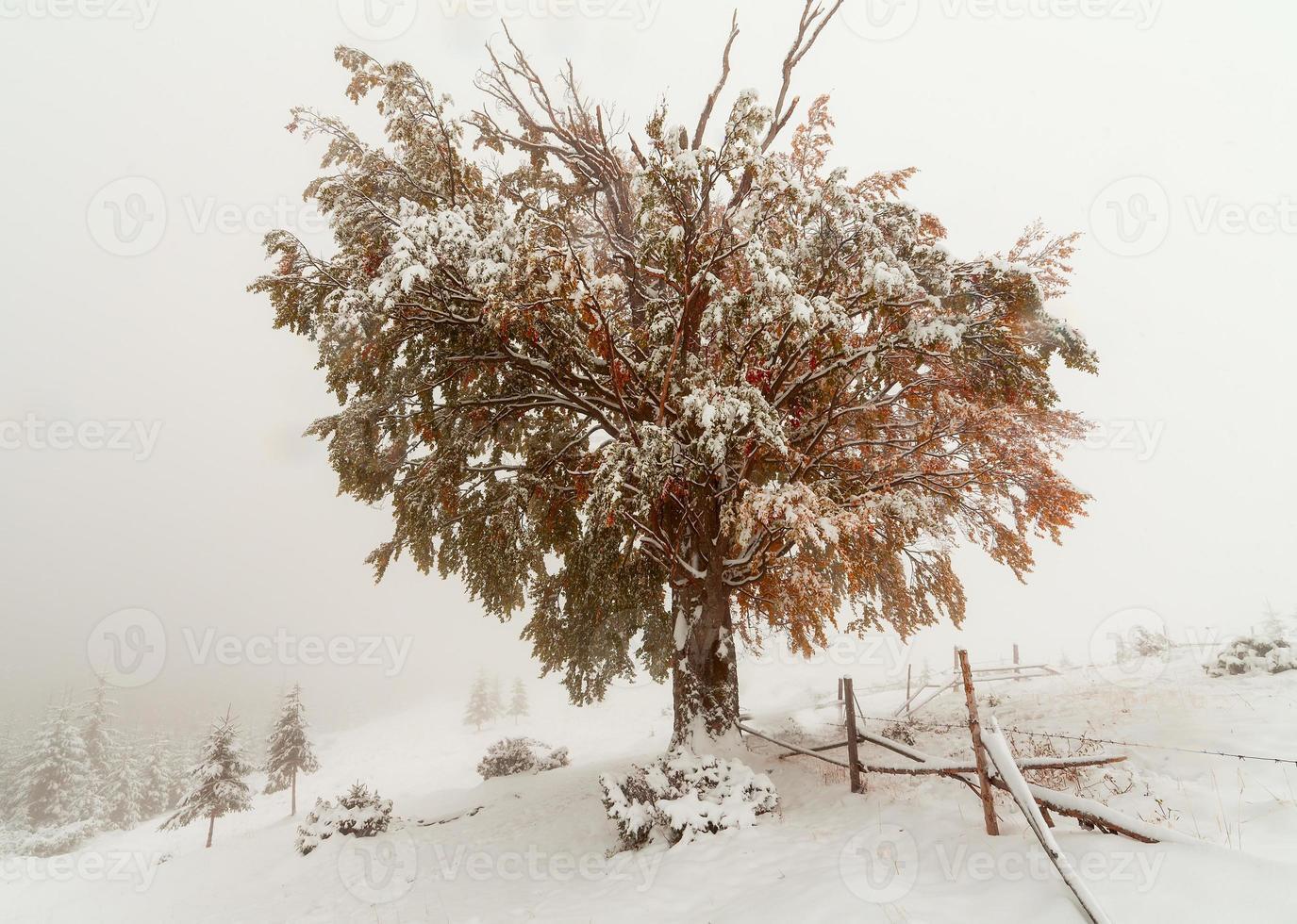 due stagioni - scena invernale e autunnale nel parco foto
