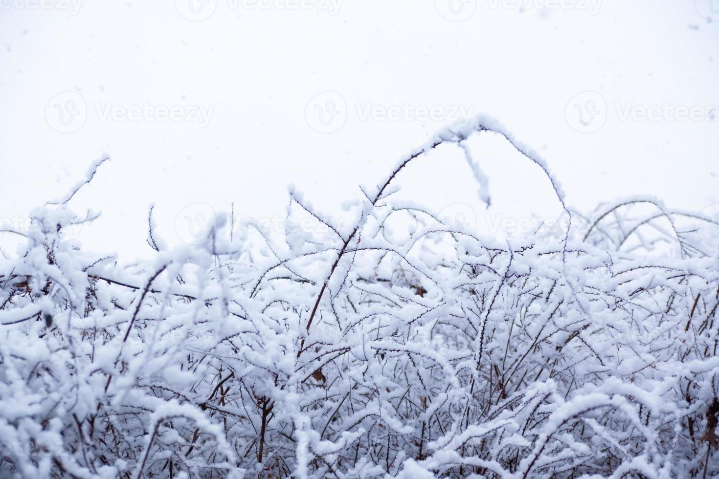 neve, scena di neve, coperta di neve in giappone foto