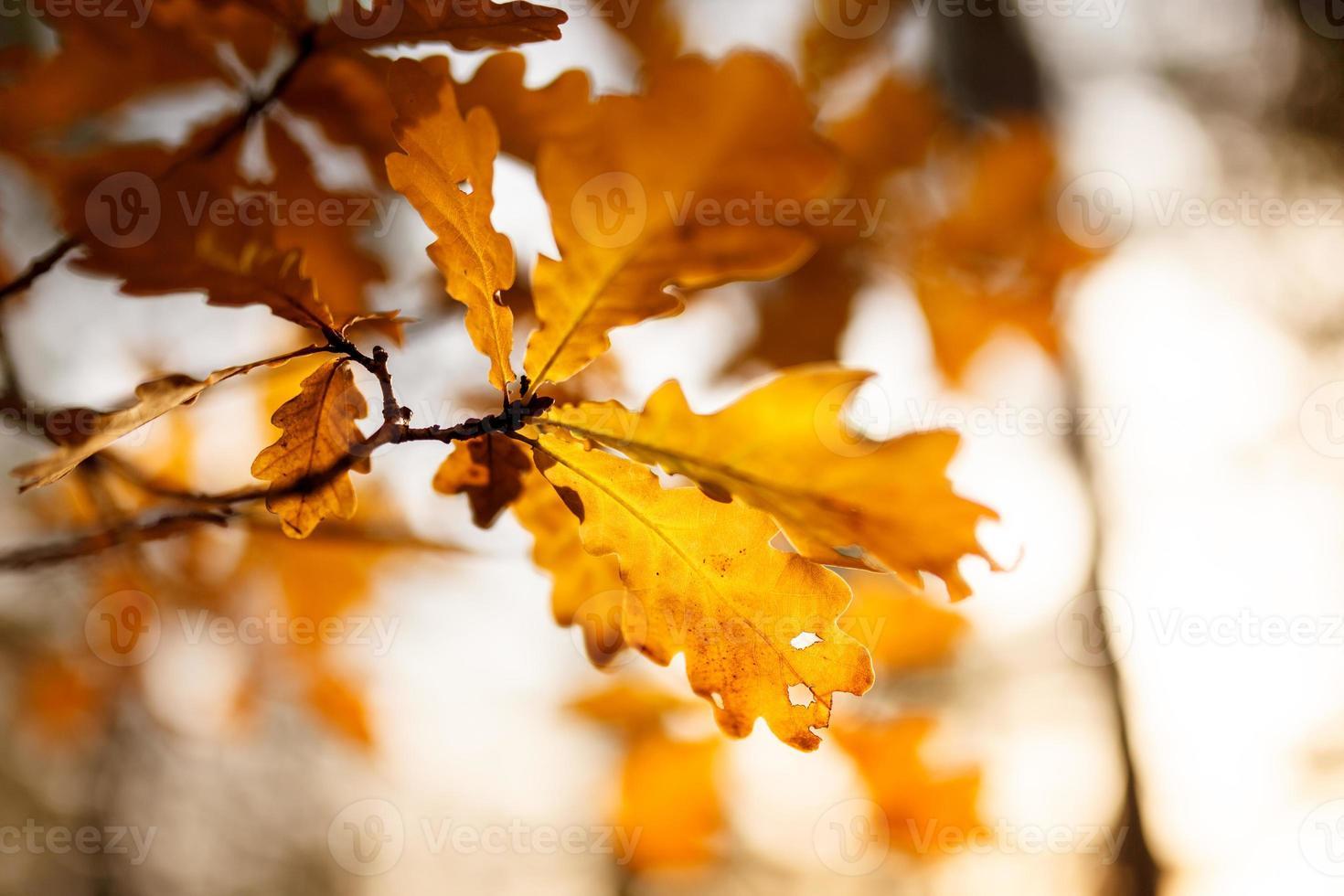 foglie colorate d'autunnali foto