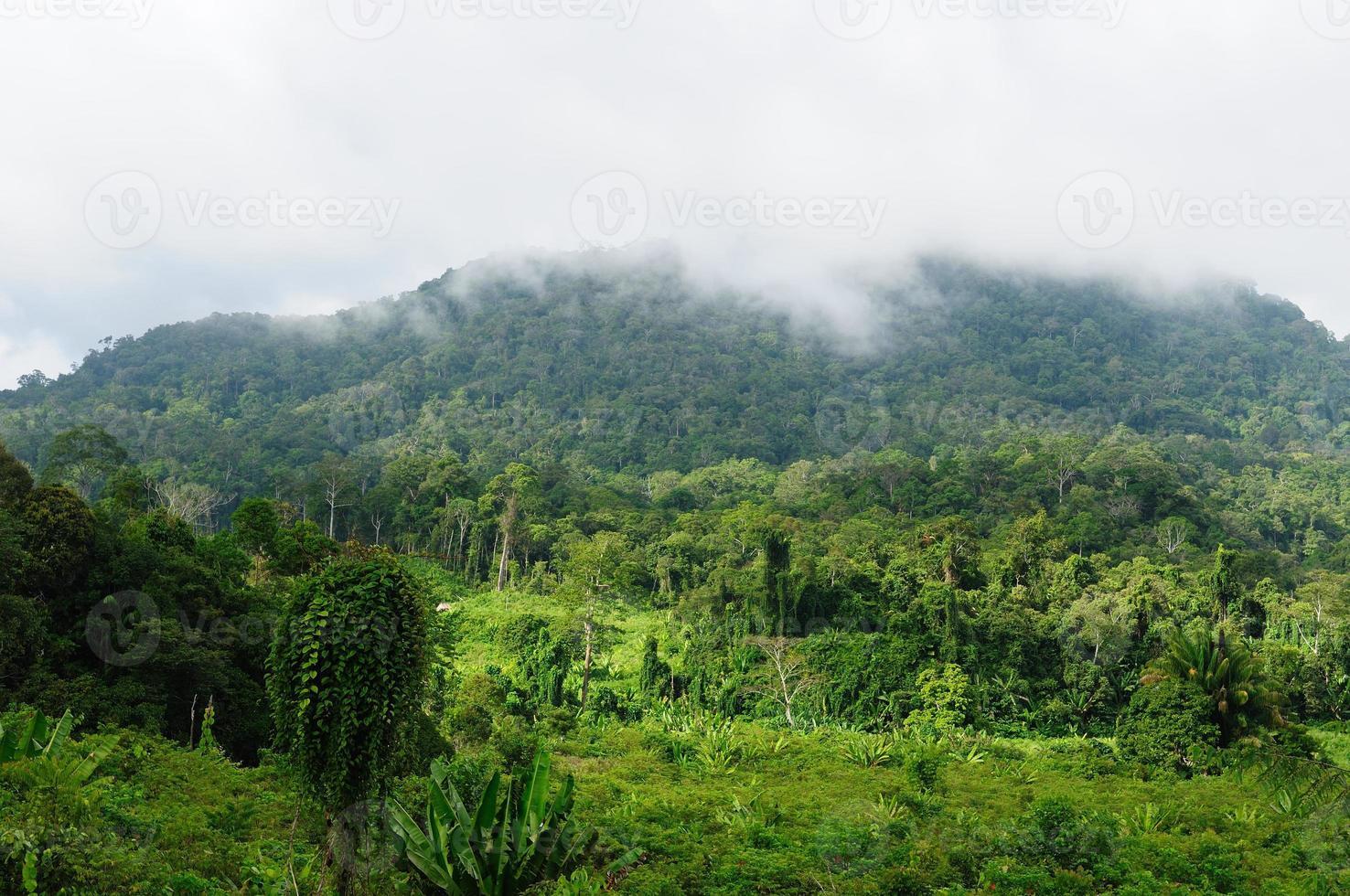 indonesia - giungla tropicale sul fiume, borneo foto